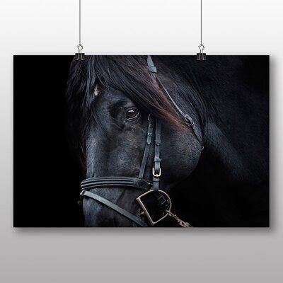 Big Box Art Black Horse Stallion Photographic Print on Canvas
