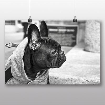 Big Box Art 'Black French Bulldog' Photographic Print
