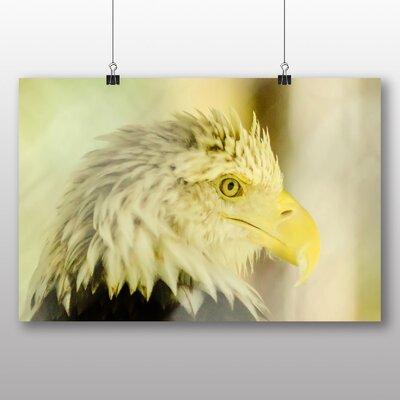 Big Box Art Bald Head eagle Bird Photographic Print on Canvas