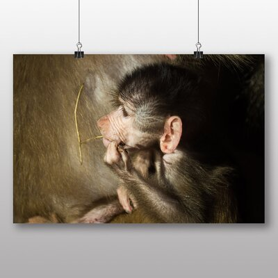 Big Box Art 'Baby Ape Monkey' Photographic Print