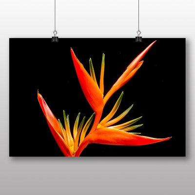 Big Box Art Bird of Paradise Flower Graphic Art Wrapped on Canvas