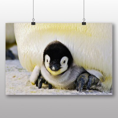 Big Box Art Baby Penguin Photographic Print Wrapped on Canvas