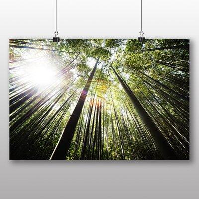 Big Box Art Bamboo Forest Photographic Print