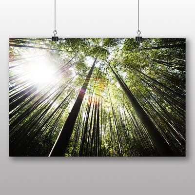 Big Box Art Bamboo Forest Photographic Print Wrapped on Canvas