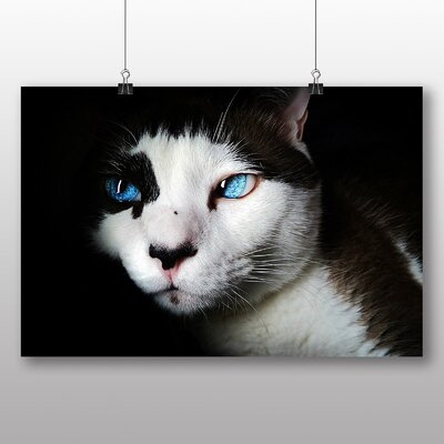 Big Box Art Blue Eyed Cat Photographic Print Wrapped on Canvas