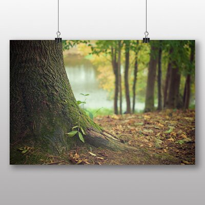 Big Box Art 'Base of the Tree' Photographic Print