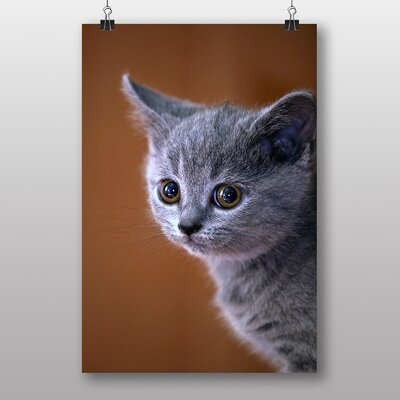 Big Box Art British Shorthair Kitten Cat Photographic Print