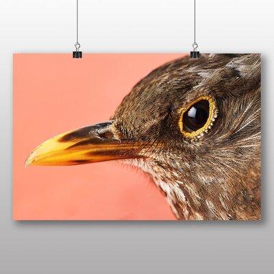 Big Box Art Brown Bird Photographic Print