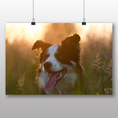 Big Box Art Border Collie Photographic Print Wrapped on Canvas