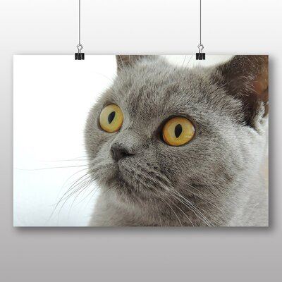 Big Box Art British Shorthair Photographic Print Wrapped on Canvas