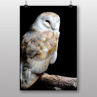 Big Box Art Barn Owl at Night Photographic Print Wrapped on Canvas