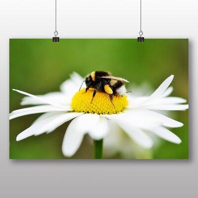 Big Box Art Bumble Bee Daisy Photographic Print