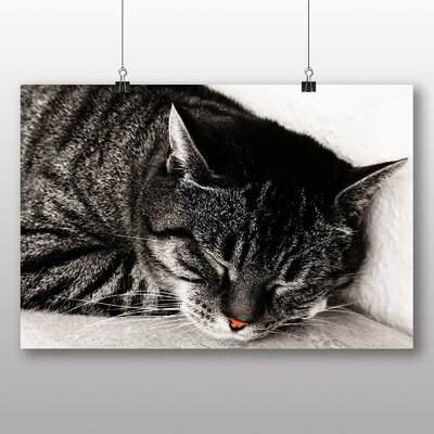 Big Box Art British Shorthair Cat No.2 Photographic Print Wrapped on Canvas