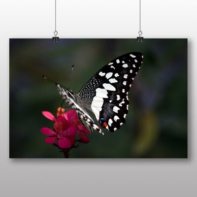 Big Box Art Butterfly No.5 No.2 Photographic Print on Canvas