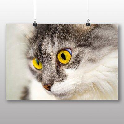 Big Box Art Cat Photographic Print on Canvas
