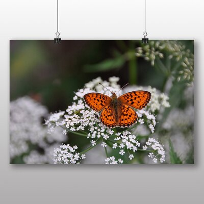 Big Box Art Butterly No.7 Photographic Print Wrapped on Canvas