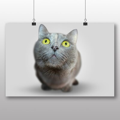 Big Box Art British Shorthair Cat No.3 Photographic Print Wrapped on Canvas