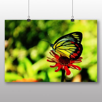 Big Box Art Butterfly and Flower Photographic Print Wrapped on Canvas