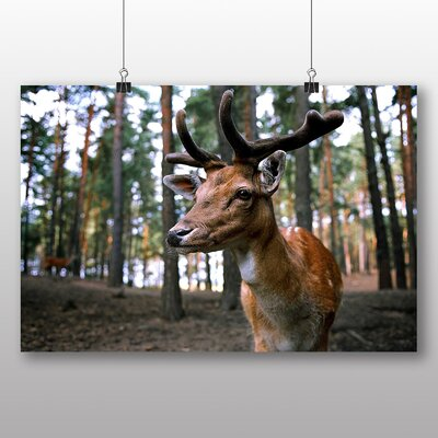 Big Box Art Deer Photographic Print on Canvas