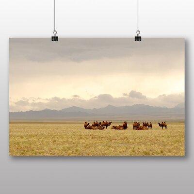 Big Box Art Camels Resting Gobi Mongolia Photographic Print