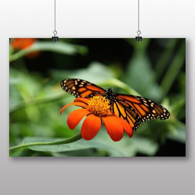 Big Box Art Butterfly 1 Photographic Print Wrapped on Canvas