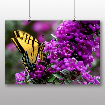 Big Box Art Butterfly No.6 No.2 Photographic Print Wrapped on Canvas