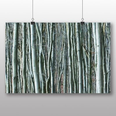 Big Box Art Beautiful Forest Wood No.6 Photographic Print Wrapped on Canvas