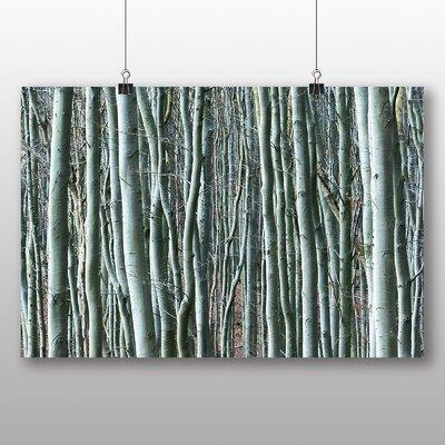 Big Box Art Beautiful Forest No.6 Photographic Print
