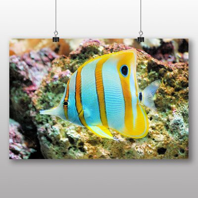 Big Box Art Butterfly Fish Photographic Print Wrapped on Canvas