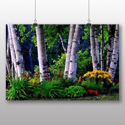 Big Box Art Birch Tree No.2 Photographic Print