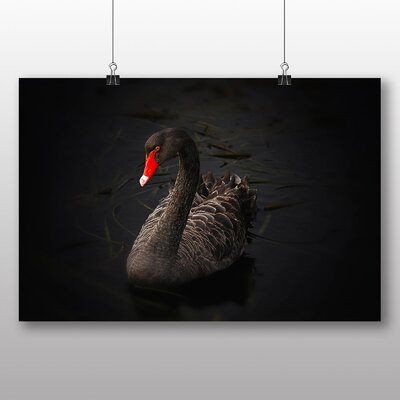 Big Box Art Black Swan Photographic Print