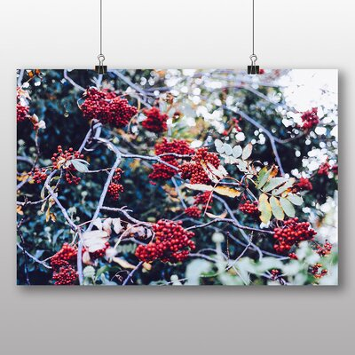 Big Box Art 'Berries on the Branch No.2' Photographic Print