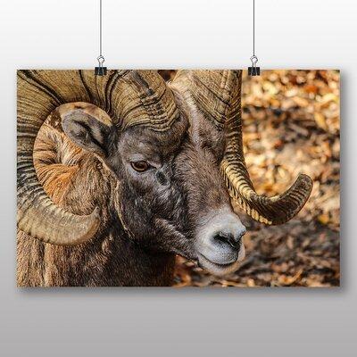 Big Box Art Bighorn Ram Sheep Photographic Print