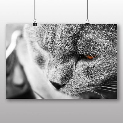 Big Box Art Cat No.5 Photographic Print