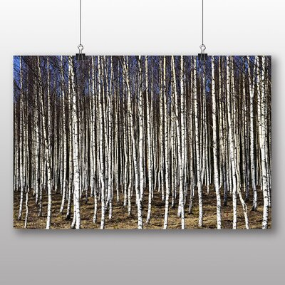 Big Box Art Birch Tree Forest No.3 Photographic Print Wrapped on Canvas