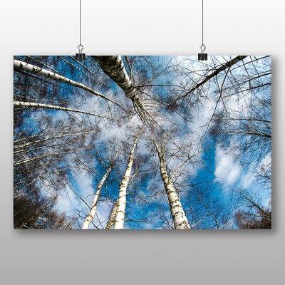 Big Box Art Birch Tree Forest No.1 Photographic Print on Canvas