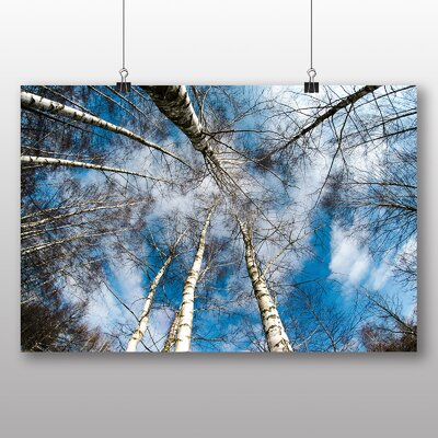 Big Box Art Birch Tree Forest No.1 Photographic Print