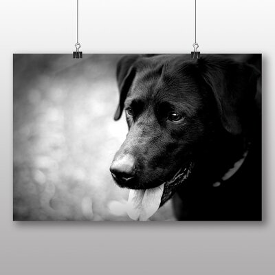 Big Box Art Black Labrador Dog Photographic Print Wrapped on Canvas