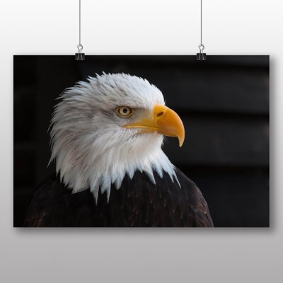 Big Box Art Bald Eagle Photographic Print Wrapped on Canvas