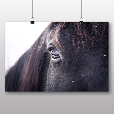 Big Box Art 'Black Horse Close Up' Photographic Print