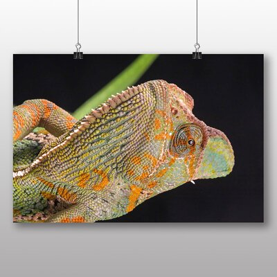 Big Box Art Chameleon No.3 Photographic Print