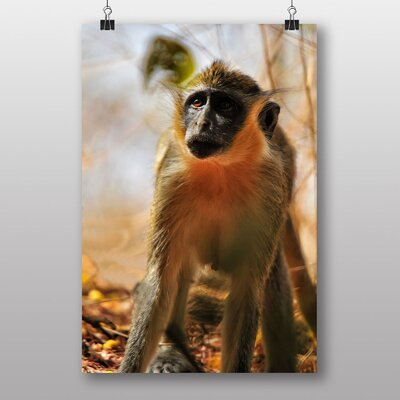 Big Box Art Chamka Baboon Photographic Print