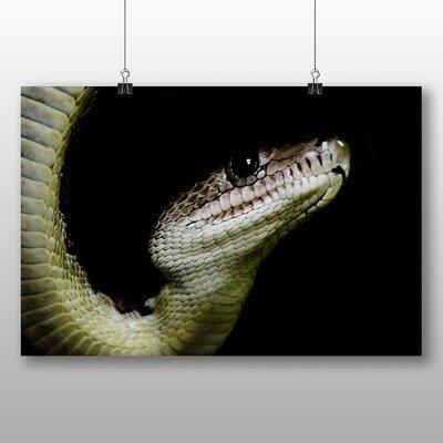 Big Box Art Boa Snake Photographic Print Wrapped on Canvas