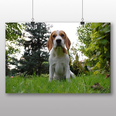 Big Box Art Beagle Dog Photographic Print on Canvas