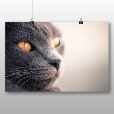 Big Box Art British Shorthair Cat No.5 Photographic Print on Canvas