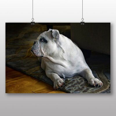 Big Box Art British English Bulldog Dog Photographic Print