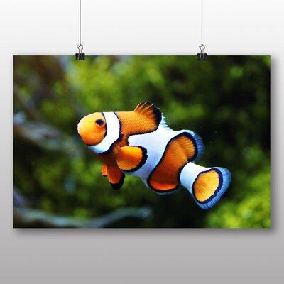 Big Box Art Clownfish Clown Fish Photographic Print