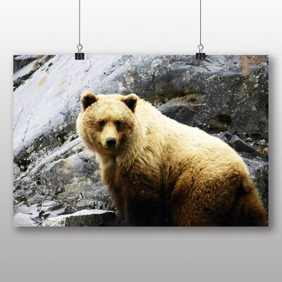 Big Box Art Brown Bear Photographic Print on Canvas