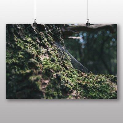 Big Box Art 'Cobwebs and Moss' Photographic Print