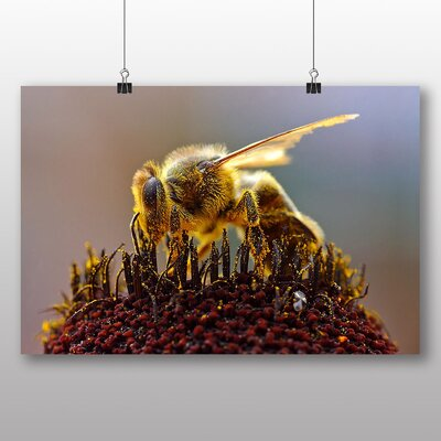 Big Box Art Bee Collecting Pollen Photographic Print Wrapped on Canvas